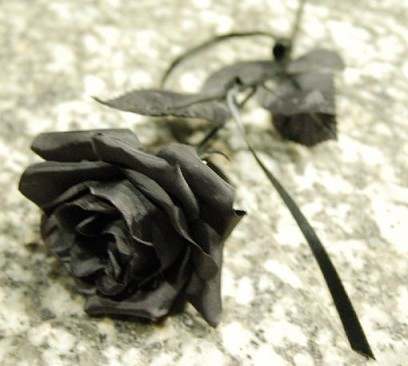 By César Astudillo from Collado Villalba, Spain (Suddenly, a black rose) [CC-BY-2.0], via Wikimedia Commons cropped by @mea culpa