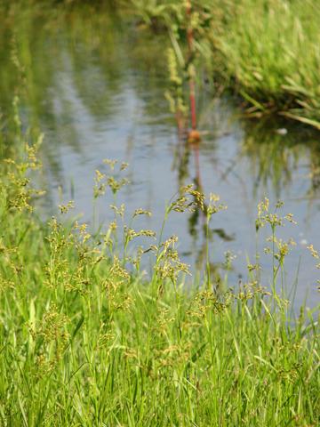 Fractal-Grasses_tn