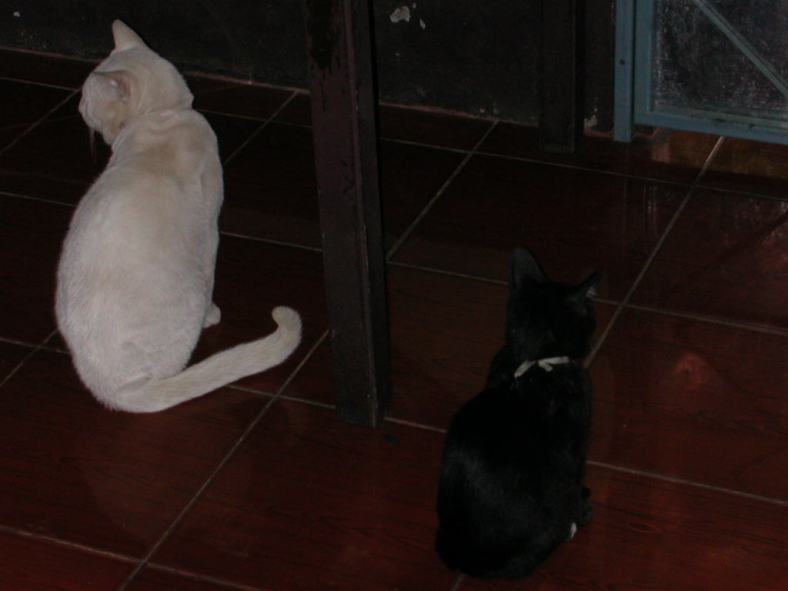White_cat_and_black_cat_sitting_on_the_floor